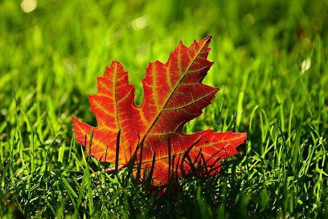Autumn Equinox 9-22-2020   Balance and Harmony!
